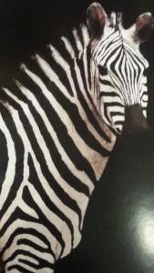 macaya Cebra